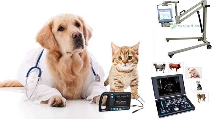 Veterinary equipment, vet equipment supplier, pet equipment supply